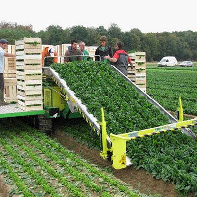 Прибираща техника за листни зеленчуци